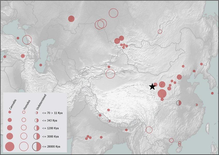 Geographical center of Cannabis origin near Qinghai Lake, Tibetan Plateau